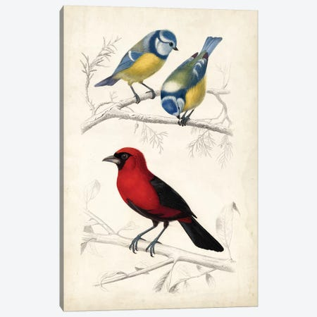 D'Orbigny Birds III Canvas Print #MDO3} by M. Charles D'Orbigny Canvas Print