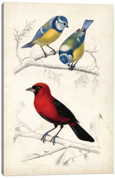 D'Orbigny Birds III Canvas Art Print