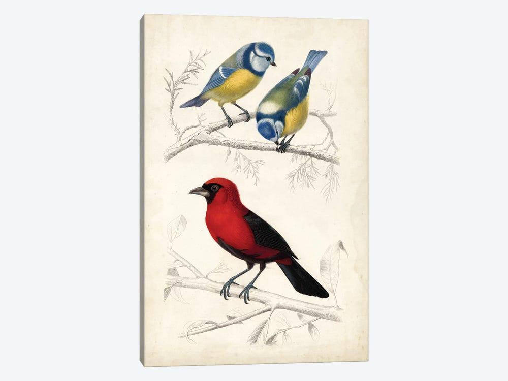 D'Orbigny Birds III by M. Charles D'Orbigny 1-piece Canvas Art Print