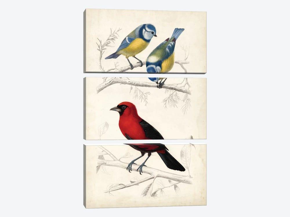 D'Orbigny Birds III by M. Charles D'Orbigny 3-piece Canvas Print