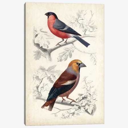 D'Orbigny Birds IV Canvas Print #MDO4} by M. Charles D'Orbigny Canvas Art