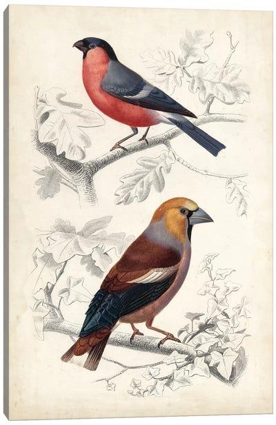 D'Orbigny Birds IV Canvas Art Print