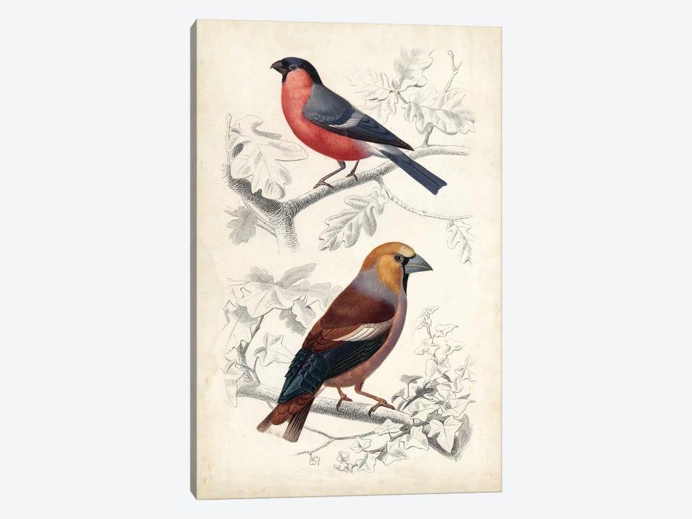 D'Orbigny Birds IV by M. Charles D'Orbigny 1-piece Canvas Artwork
