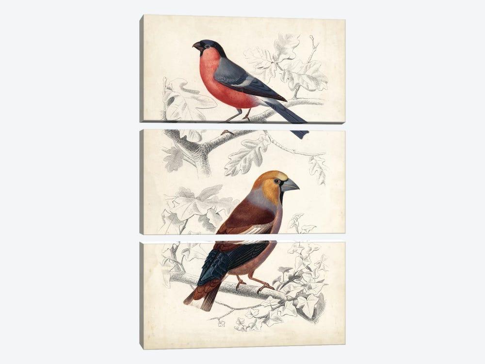 D'Orbigny Birds IV by M. Charles D'Orbigny 3-piece Canvas Wall Art