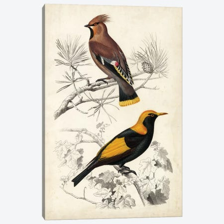 D'Orbigny Birds V Canvas Print #MDO5} by M. Charles D'Orbigny Canvas Art