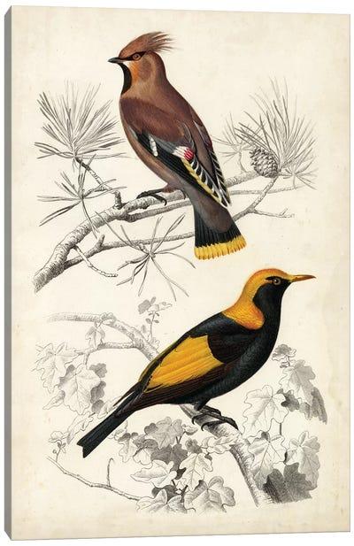 D'Orbigny Birds V Canvas Art Print