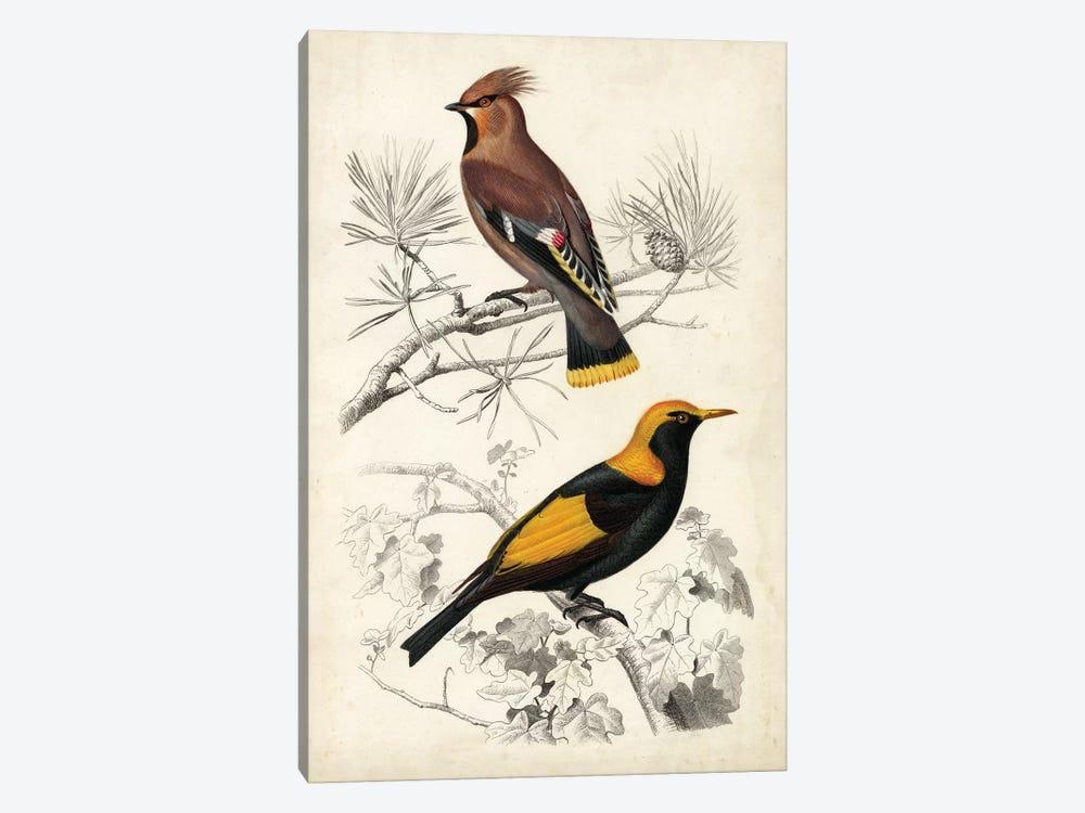 D'Orbigny Birds V by M. Charles D'Orbigny 1-piece Art Print