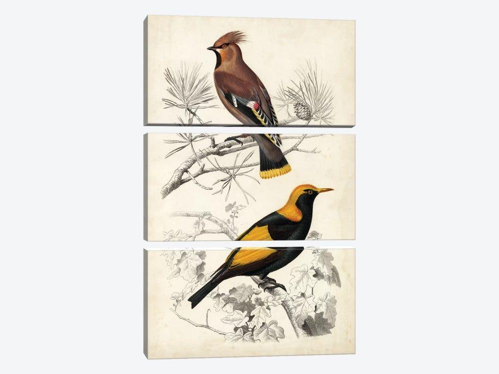 D'Orbigny Birds V by M. Charles D'Orbigny 3-piece Art Print