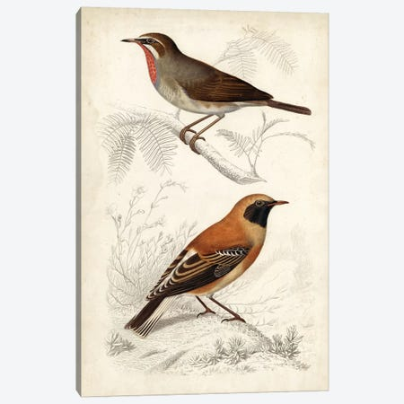 D'Orbigny Birds VI Canvas Print #MDO6} by M. Charles D'Orbigny Canvas Wall Art