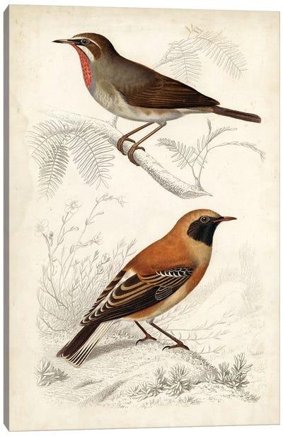 D'Orbigny Birds VI Canvas Art Print