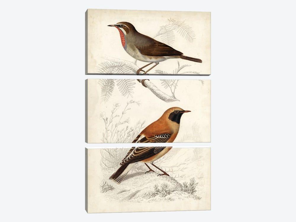 D'Orbigny Birds VI by M. Charles D'Orbigny 3-piece Canvas Art