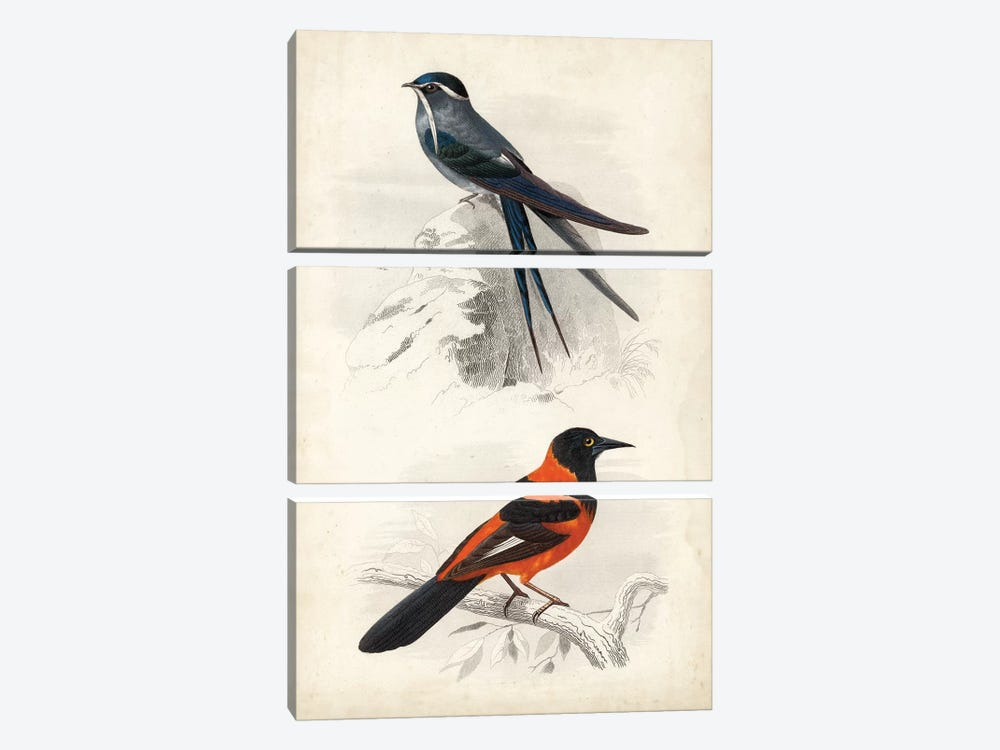 D'Orbigny Birds VII by M. Charles D'Orbigny 3-piece Art Print