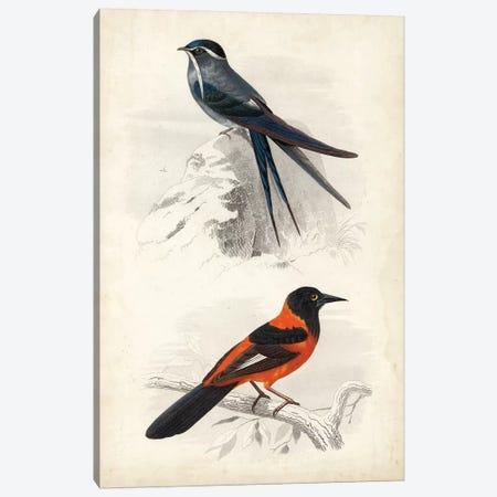 D'Orbigny Birds VII Canvas Print #MDO7} by M. Charles D'Orbigny Canvas Art