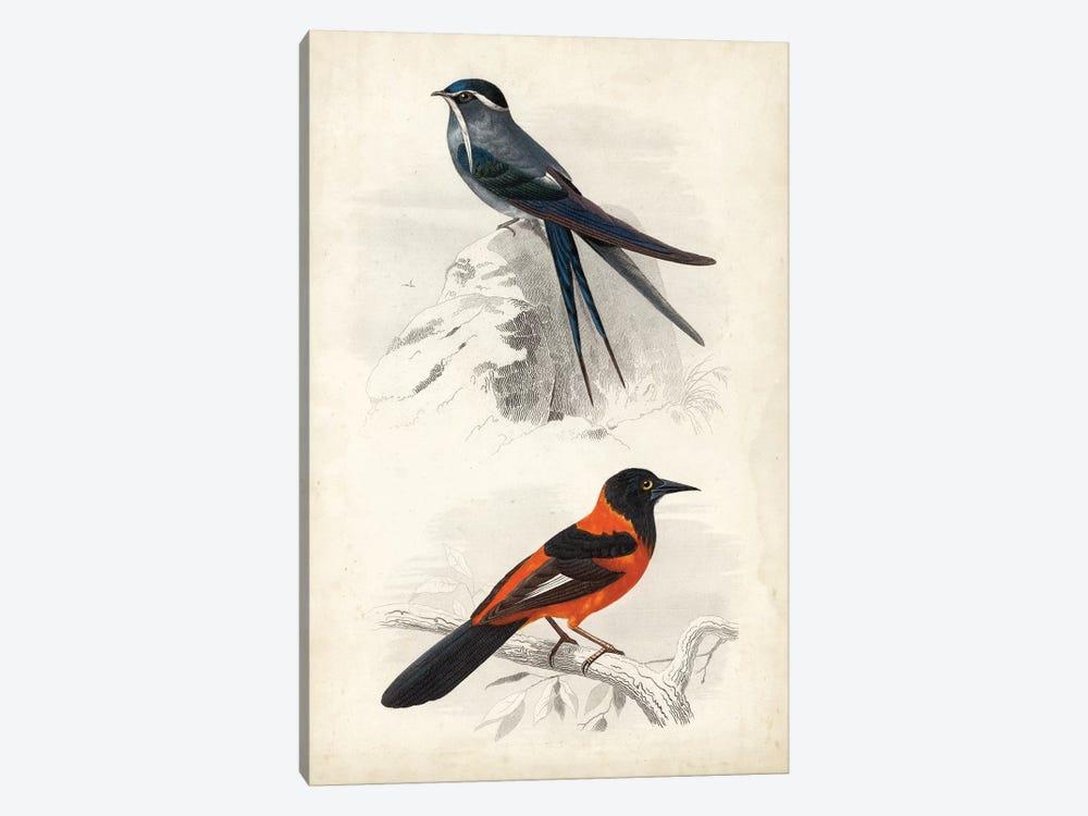 D'Orbigny Birds VII by M. Charles D'Orbigny 1-piece Canvas Print