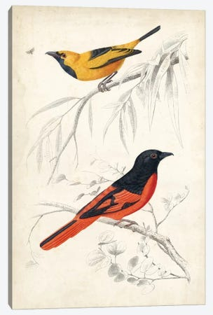 D'Orbigny Birds VIII Canvas Print #MDO8} by M. Charles D'Orbigny Canvas Print