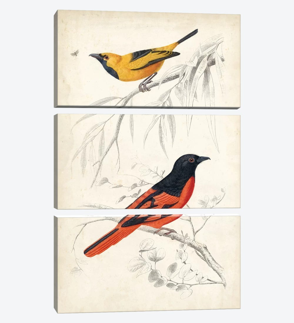 D'Orbigny Birds VIII by M. Charles D'Orbigny 3-piece Canvas Art