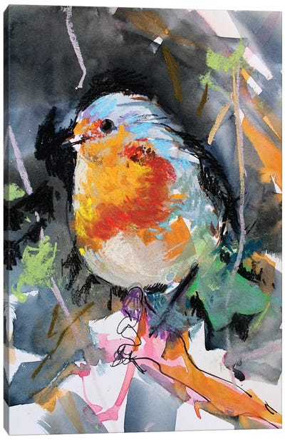 Petirrojo Canvas Art Print
