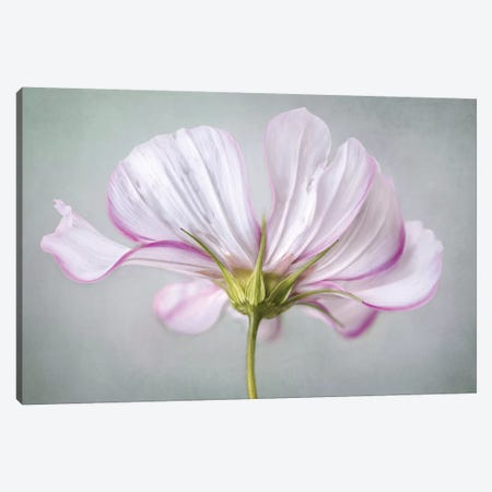 Textured Floral 3-Piece Canvas #MDY10} by Mandy Disher Canvas Print