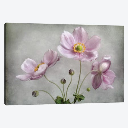 Textured Floral Canvas Print #MDY11} by Mandy Disher Art Print