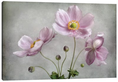 Textured Floral Canvas Art Print