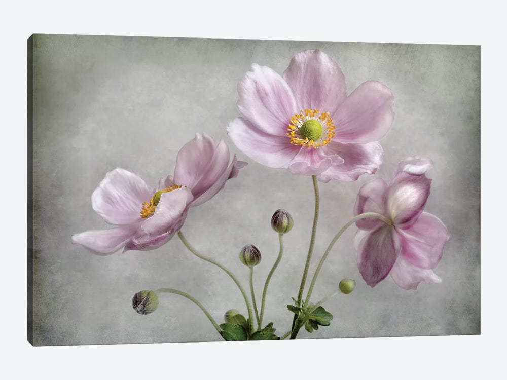 Textured Floral by Mandy Disher 1-piece Canvas Art