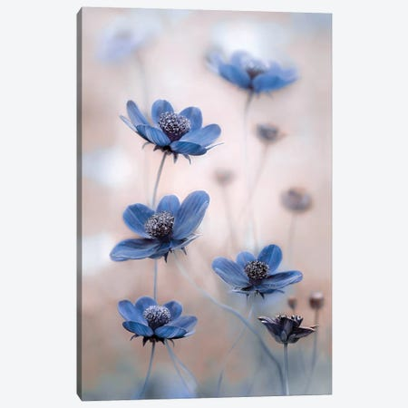 Cosmos Blue Canvas Print #MDY14} by Mandy Disher Canvas Art