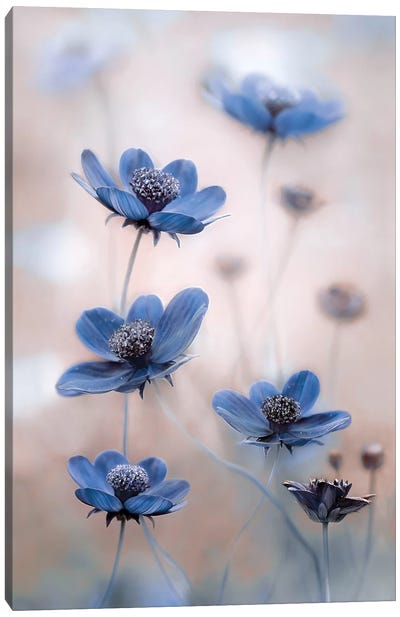 Cosmos Blue Canvas Art Print