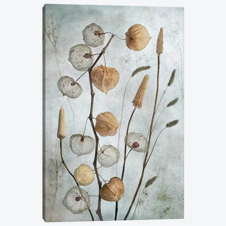 Lanterns Canvas Print #MDY16} by Mandy Disher Canvas Artwork
