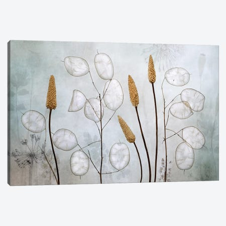Lunaria Canvas Print #MDY17} by Mandy Disher Canvas Art