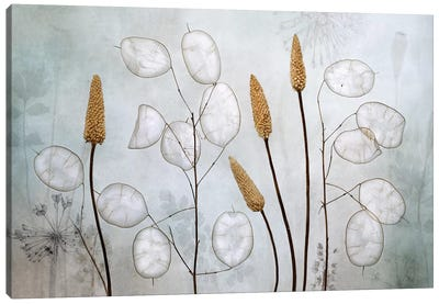 Lunaria Canvas Art Print