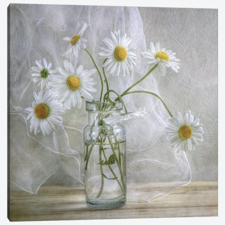Daisies Canvas Print #MDY1} by Mandy Disher Canvas Art