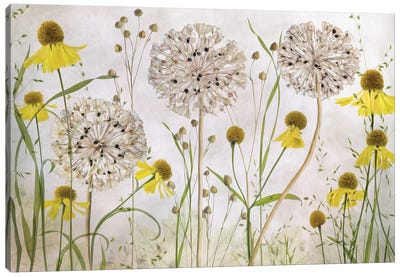 Alliums And Heleniums Canvas Art Print