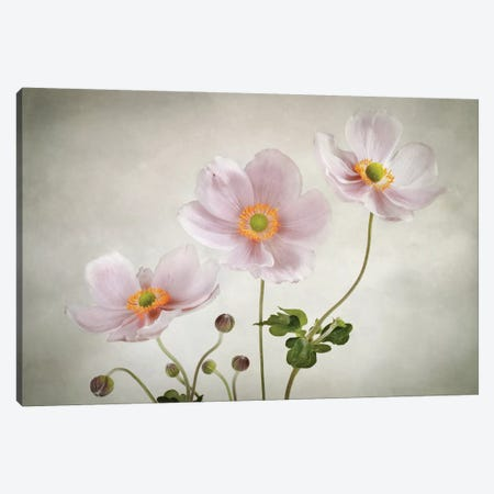 Anemones 3-Piece Canvas #MDY24} by Mandy Disher Canvas Art Print