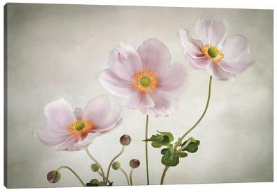 Anemones Canvas Art Print
