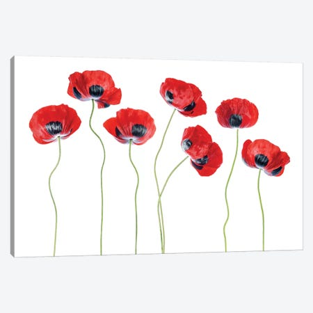Ladybird Poppies Canvas Print #MDY30} by Mandy Disher Canvas Print