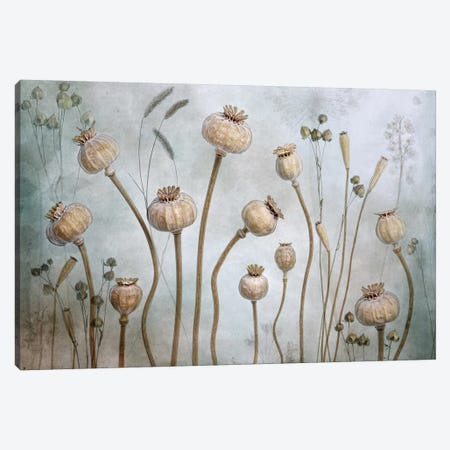 Papaver Canvas Print #MDY32} by Mandy Disher Canvas Print
