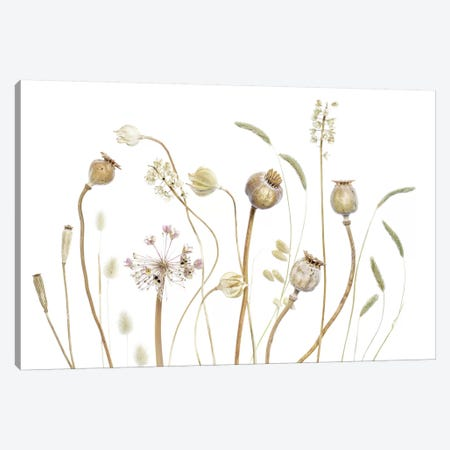 Pods Canvas Print #MDY34} by Mandy Disher Canvas Wall Art