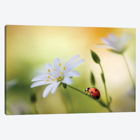 Summer Beauties Canvas Print #MDY36} by Mandy Disher Canvas Artwork