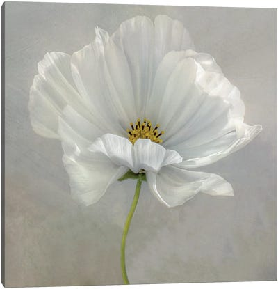 Daisy Detail II Canvas Art Print