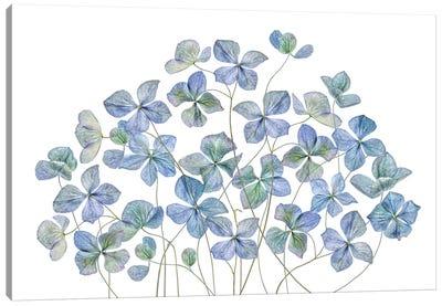 Hydrangea Canvas Art Print