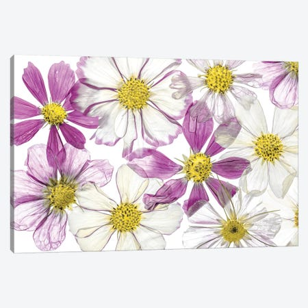 Keeping Summer Canvas Print #MDY42} by Mandy Disher Canvas Wall Art