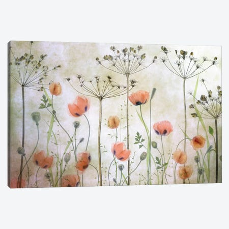 Poppy Meadow Canvas Print #MDY43} by Mandy Disher Canvas Wall Art