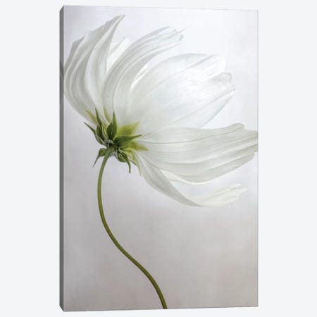 Etherial 3-Piece Canvas #MDY5} by Mandy Disher Canvas Print