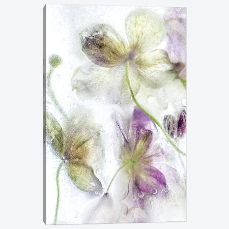 Frozen Floral IV 3-Piece Canvas #MDY7} by Mandy Disher Canvas Art Print