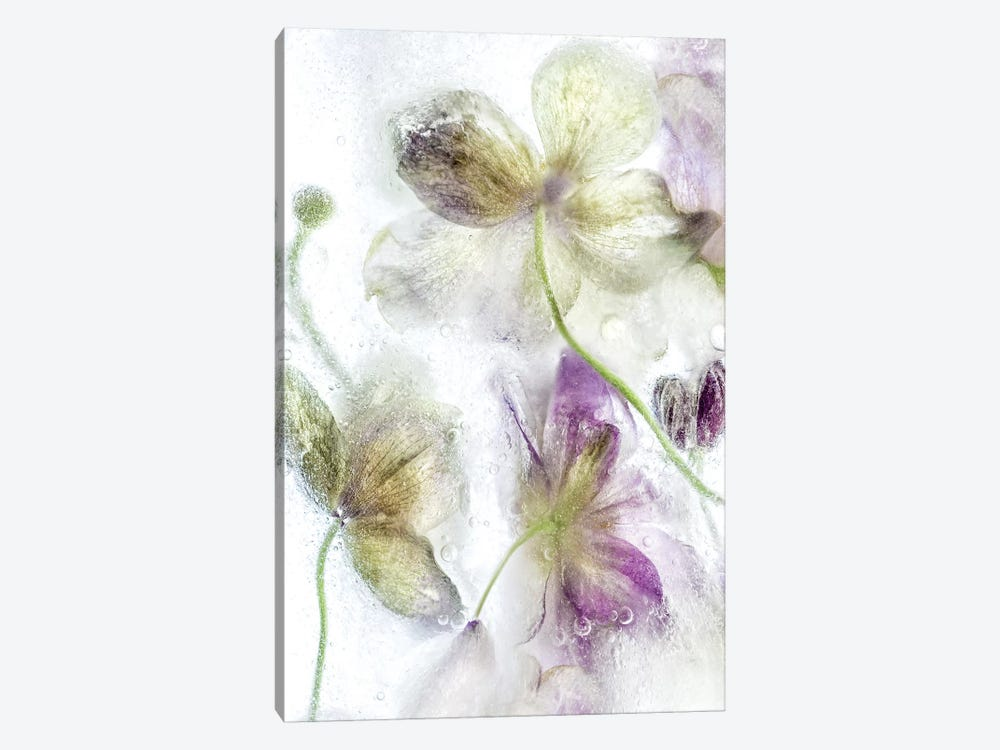 Frozen Floral IV by Mandy Disher 1-piece Canvas Print
