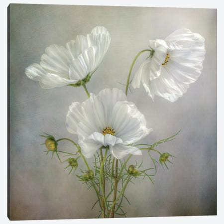 Still Life II Canvas Print #MDY9} by Mandy Disher Canvas Wall Art