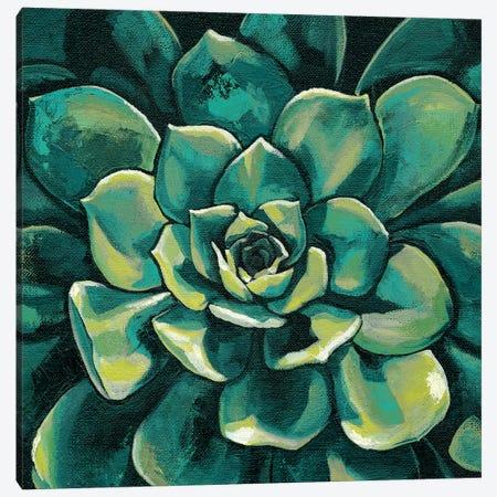 Succulent Bloom I 3-Piece Canvas #MEA42} by Megan Meagher Canvas Print