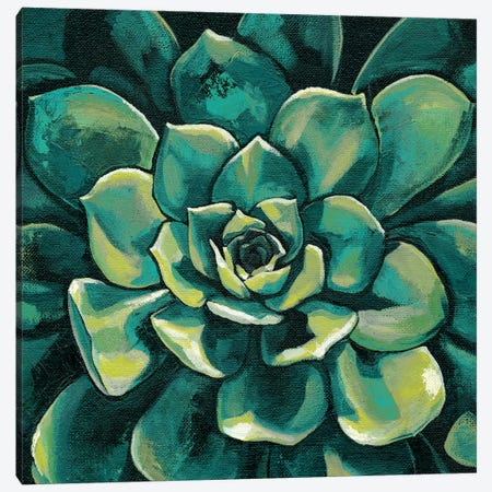 Succulent Bloom I Canvas Print #MEA42} by Megan Meagher Canvas Print