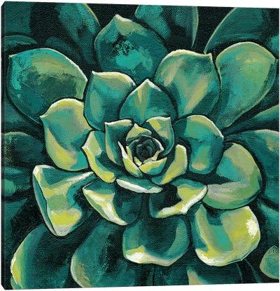 Succulent Bloom I Canvas Art Print