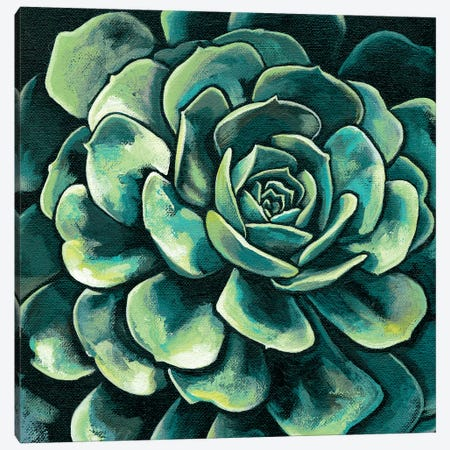 Succulent Bloom II Canvas Print #MEA43} by Megan Meagher Canvas Print